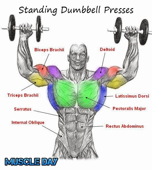 Shoulder Exercises Standing Two Arm Dumbbell Presses