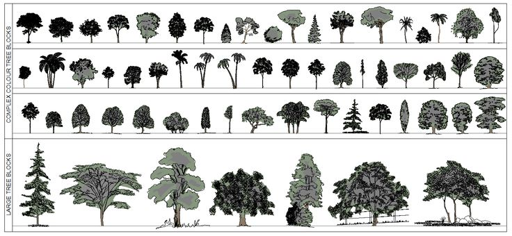 54 best images about How to Draw Realistic Trees, Plants