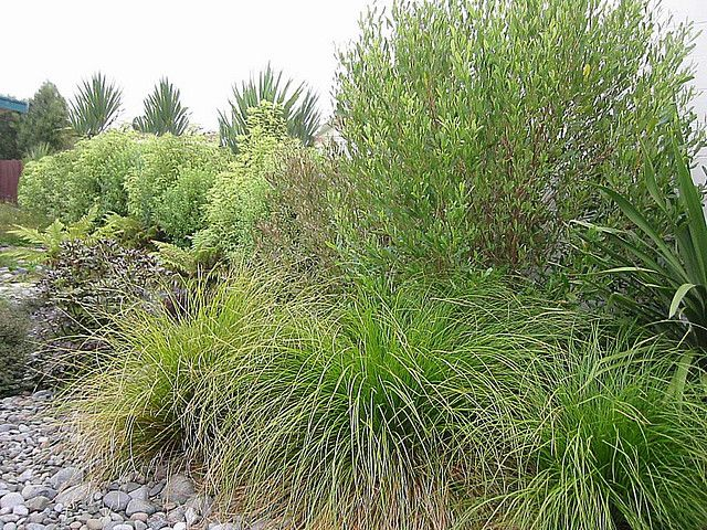 31 Best Images About New Zealand Native Gardens On Pinterest