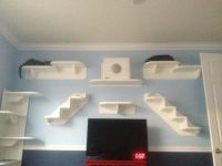 Best 10+ Cat climbing wall ideas on Pinterest | Cat ...