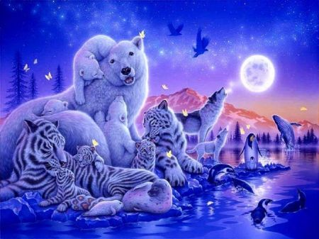 Cute Crisp Wallpapers What A Wonderful World Whales Abstract Owls Animals