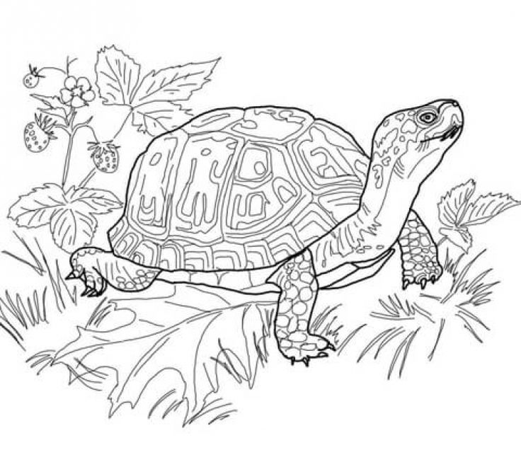 Realistic giant land Turtle difficult coloring pages for