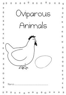 17 Best images about Oviparous Animals on Pinterest