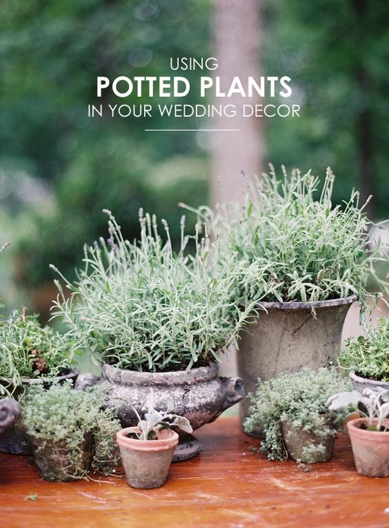 25 best ideas about Potted Plant Centerpieces on Pinterest  Plant centerpieces Gypsophila