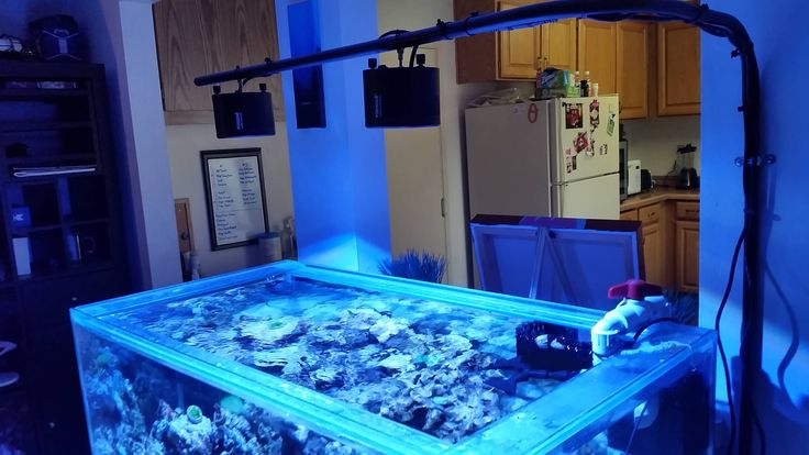 17 best images about Coral Frag tankssale tanks on