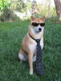 dog, tie, glasses | Animals Wearing Ties | Pinterest ...