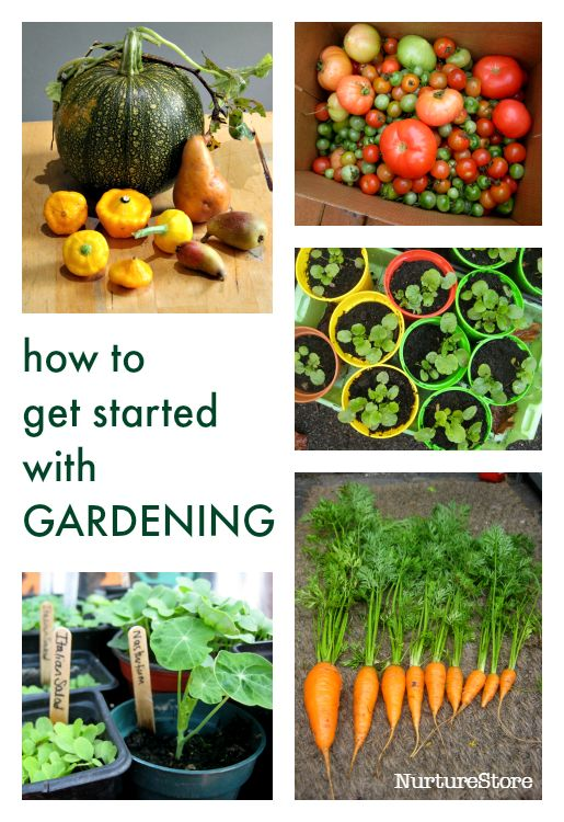 25 Best Ideas About Garden Club On Pinterest Clubbed Thumb