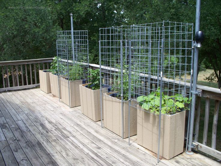 15 Best Images About Deck Container Gardening On Pinterest