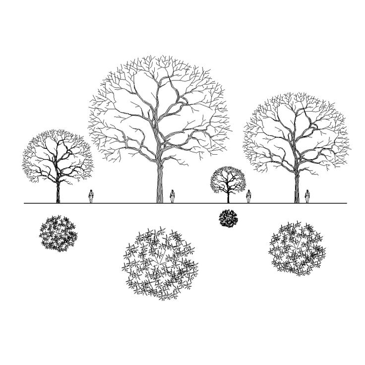 Download this collection of 40 Revit Tree Families / 3D