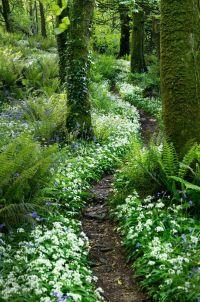 Best 25+ Woodland garden ideas on Pinterest   Forest ...