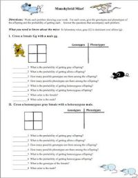 Genetics, Worksheets and Classroom freebies on Pinterest
