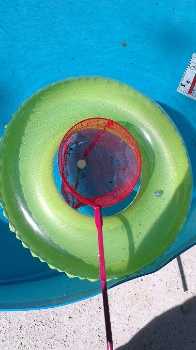 To keep my kiddie pool clean I put chlorine tabs in a