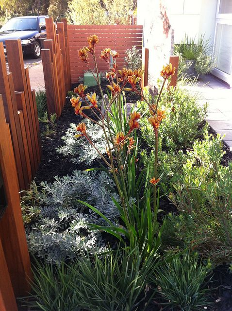86 Best Images About Native Gardens On Pinterest Kangaroo Paw