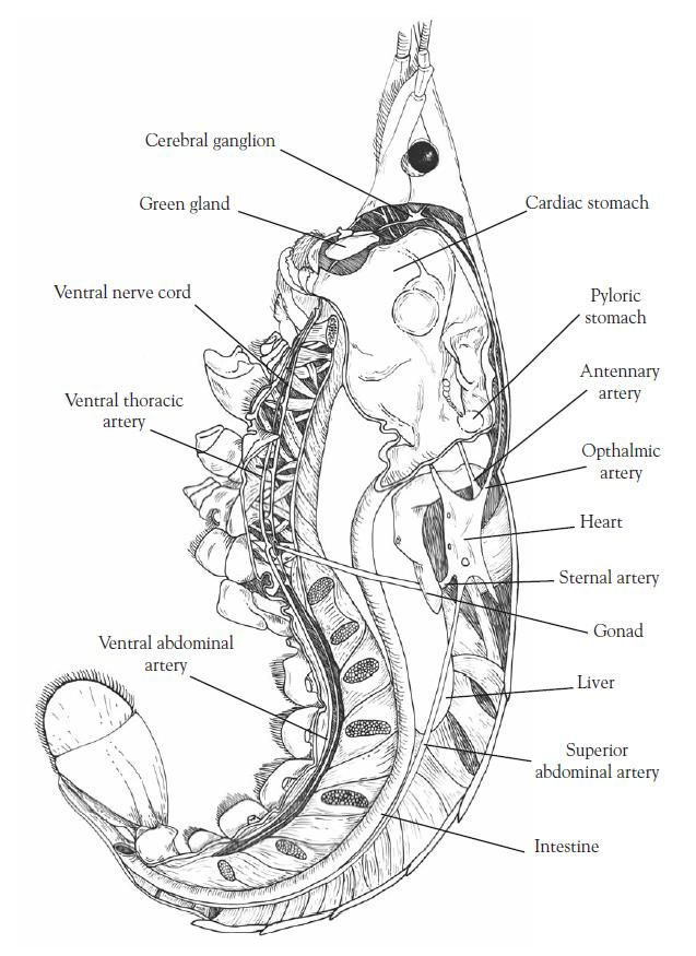 25 best images about High School Biology on Pinterest