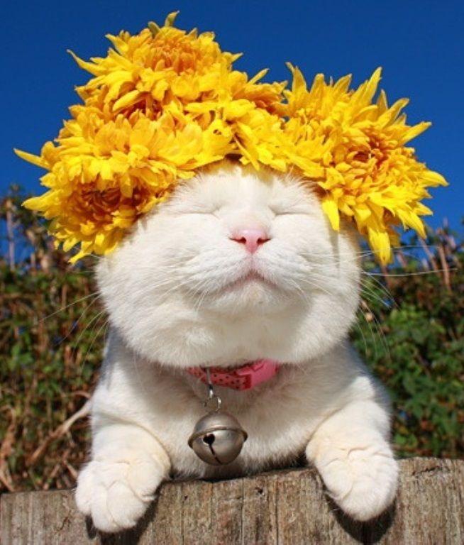 Medicine Cat Apprentice