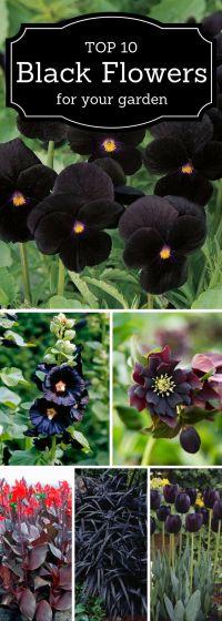 Best 25+ Dark flowers ideas on Pinterest | Black flowers ...