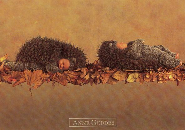 Fall Hedgehog Wallpaper Anne Geddes ♡ ♡ Anne Geddes ♡ ♡ Pinterest Anne