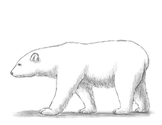 121 best images about Polar Bear Project Ideas on