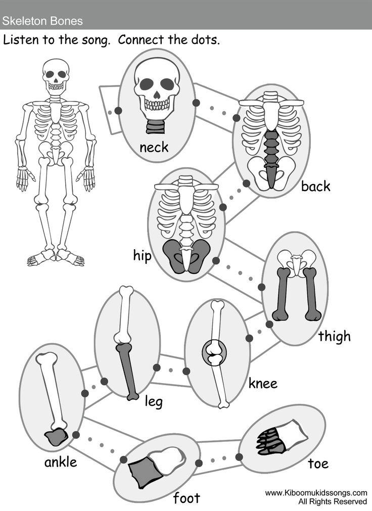 78+ images about 3rd Science-Skeletal System on Pinterest