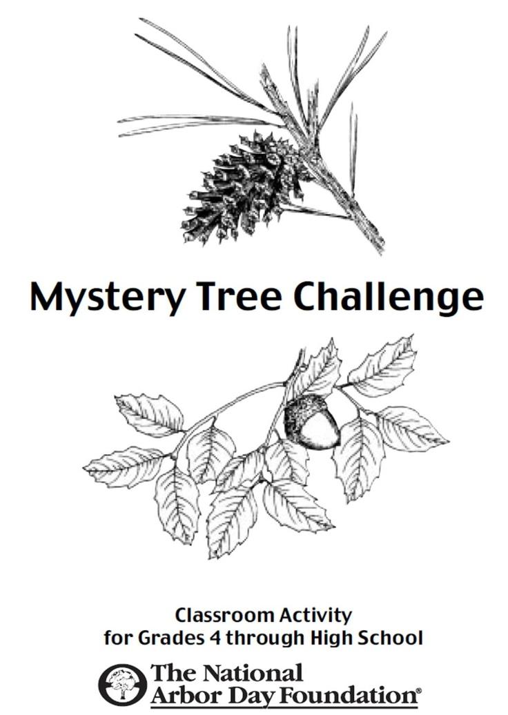 1000+ ideas about Tree Identification on Pinterest