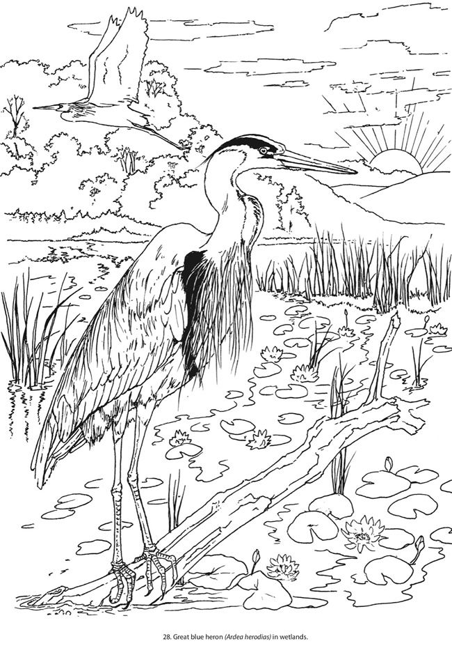 265 best images about Coloring pages Birds on Pinterest