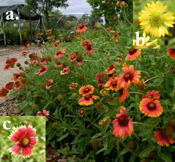 florida natives