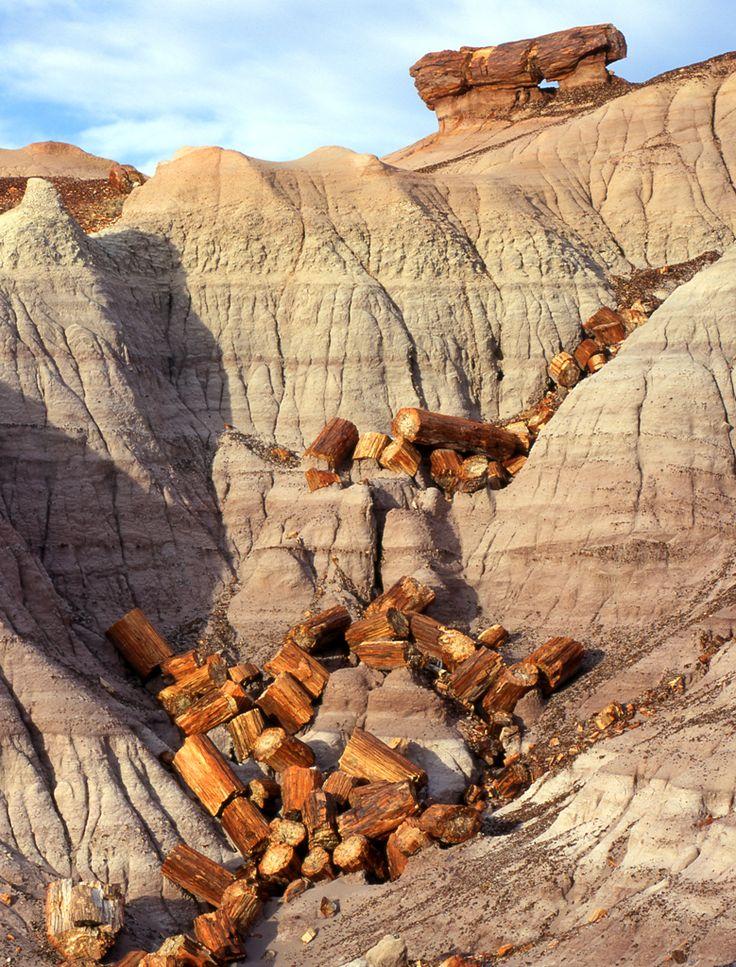25 best ideas about Petrified Wood on Pinterest