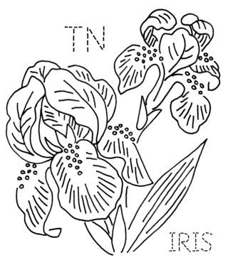 10+ images about Iris line drawings on Pinterest