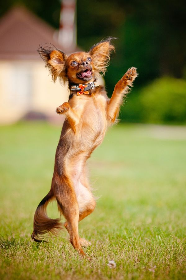 The UK Kennel Club Bans quotExtremequot Dog Dancing Dogster