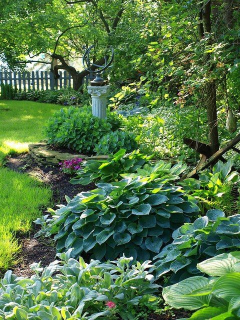hosta and shade backyard ideas
