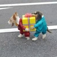 Epic dog costume | Dog costumes | Pinterest