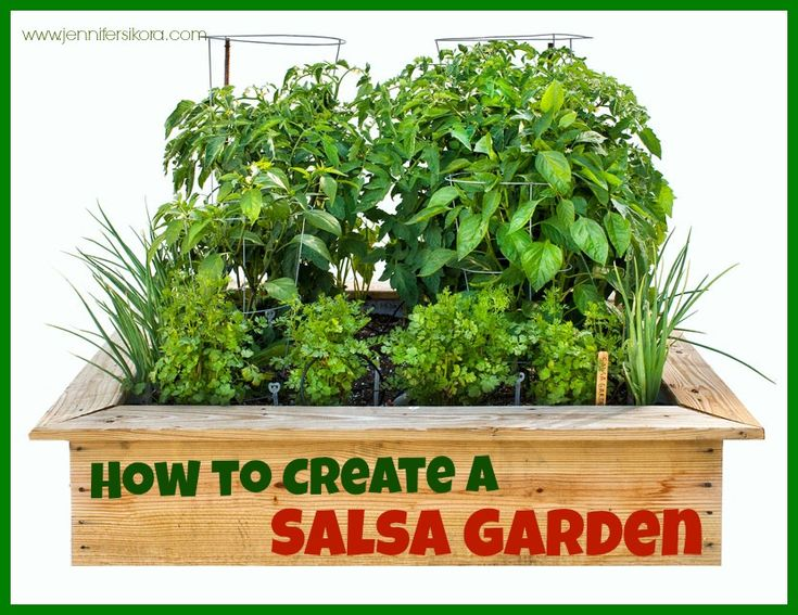 17 Best Images About Outdoors Salsa Garden On Pinterest Gardens
