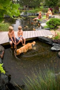 17 Best images about pond/natural swimming pool on ...