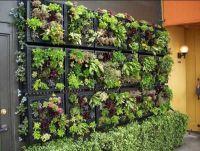 17 Best ideas about Vertical Garden Design on Pinterest ...