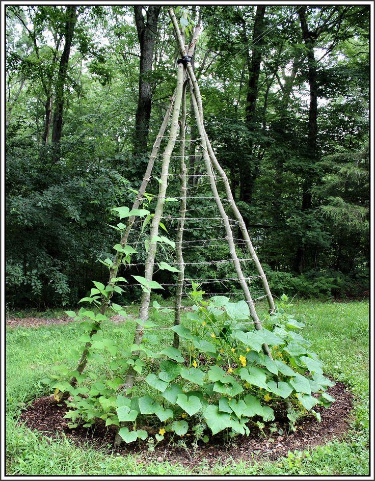 25 Best Ideas About Garden Trellis On Pinterest Trellis