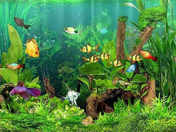 Arowana Fish 3d Live Wallpaper 25 Best Ideas About Tropical Aquarium On Pinterest Best