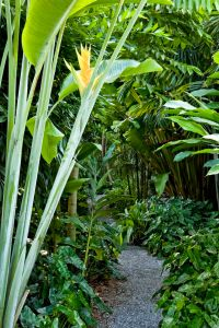 25+ best ideas about Tropical garden design on Pinterest ...