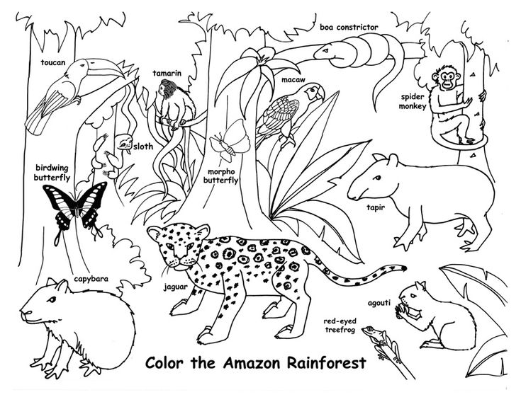 Amazon rainforest, Amazon rainforest animals and