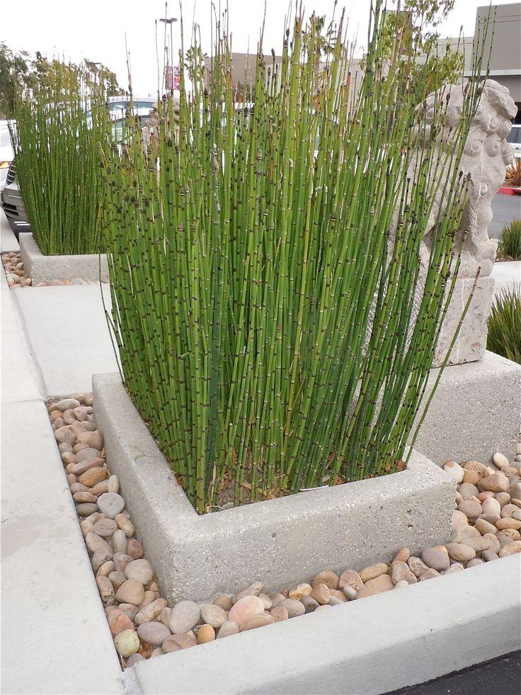 Poured In Place Concrete Planter Succulent Plants