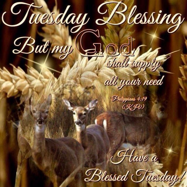 17 Best Images About Tuesday Blessings On Pinterest