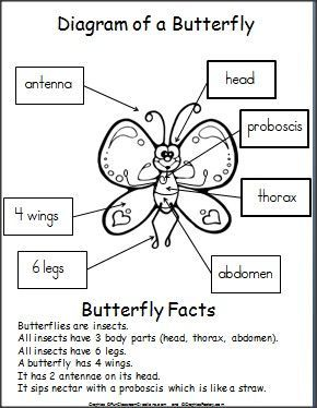 label a butterfly for kindergarten  Google Search