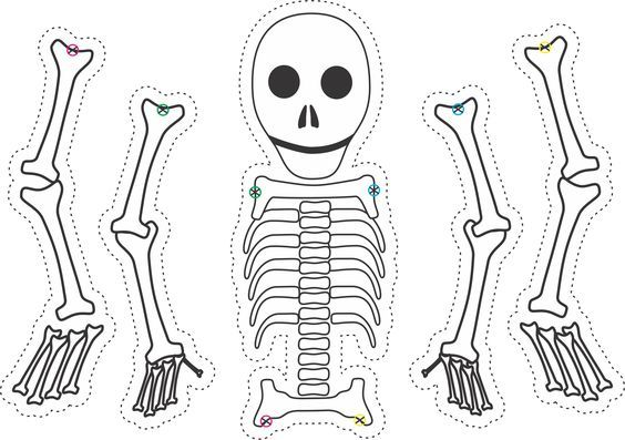 17 Best ideas about Skeleton Template on Pinterest