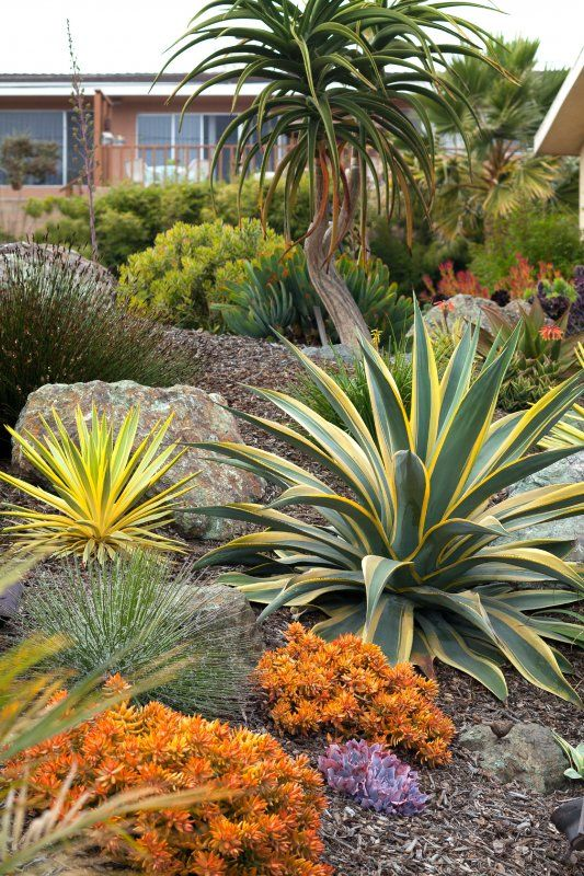 ideas yucca plant