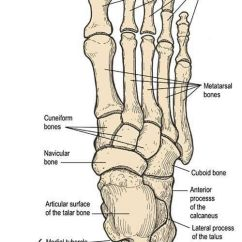 Foot Massage Therapy Diagram Hpm 770 Wiring 30 Best Images About Documentation For Reflexology On Pinterest | Anatomy, And ...