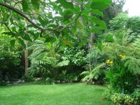 1000+ ideas about Tropical Backyard Landscaping on ...