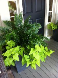 1000+ ideas about Front Porch Plants on Pinterest | Porch ...