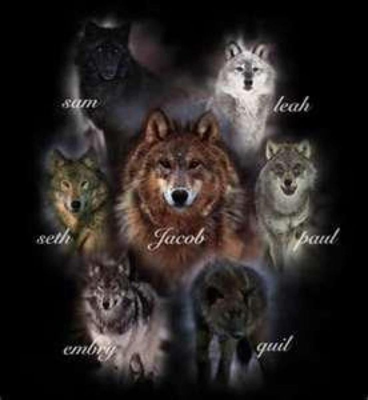 Twilight Saga Quotes Wallpaper The Wolves From Twilight Share Doggy Delights