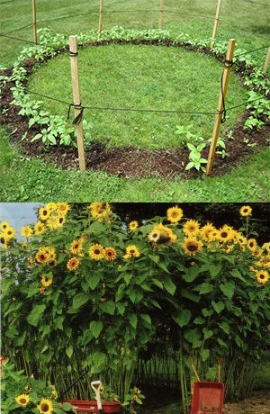Image Result For How To Plant Vegetables In Containers At Home