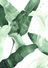 25+ best ideas about Plant Painting on Pinterest | Ficus ...