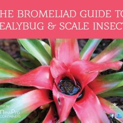 Tropical Living Room Ideas Bay Window The #bromeliad Guide To Mealybug & Scale Insects ...